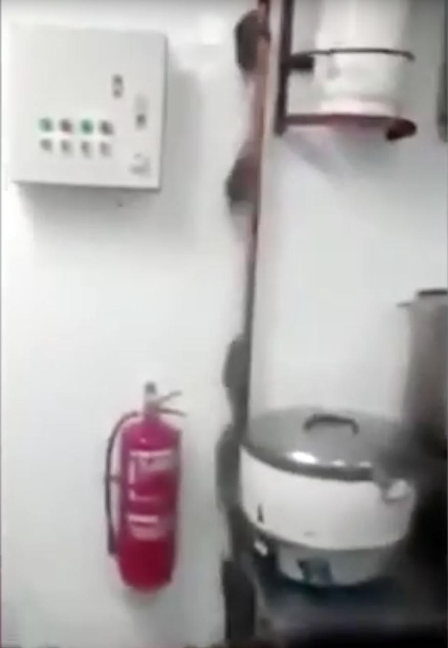 ratas-cocina1