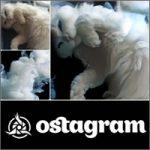 ostagram-200
