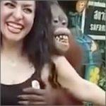 orangutan-200