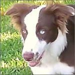 perro-setas-200