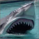 disfraz-tiburon200