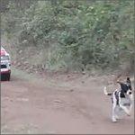 perro-rally200