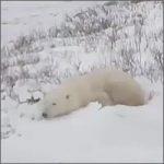 web-cam-osos200