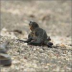 iguana-serpientes200