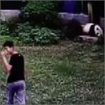 panda-enfadado200