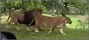 safari-sorpresa-t