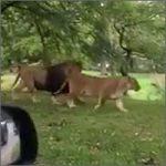 safari-sorpresa200