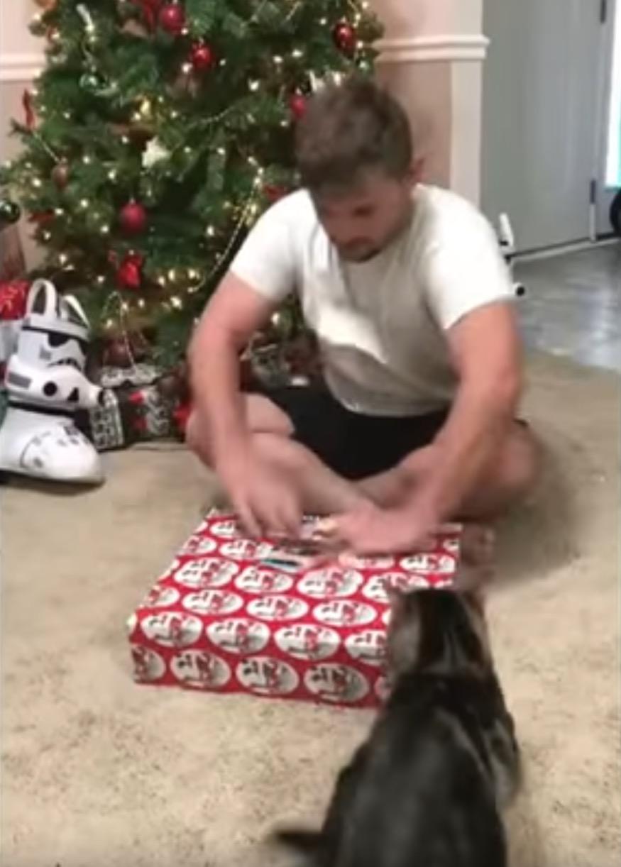 gato-ataca1