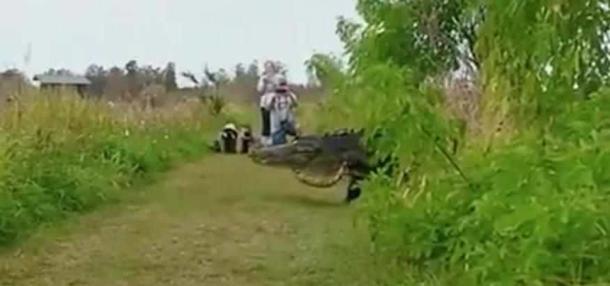 cocodrilo-gigante1