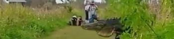 cocodrilo-gigantet