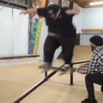 gilipollicas-skate200