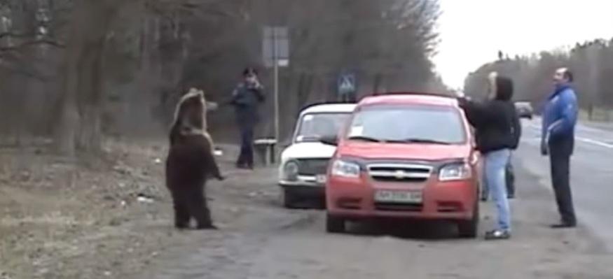 rusos-vs-osos1