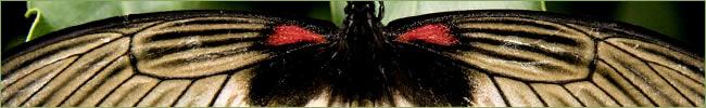 zoom mariposa
