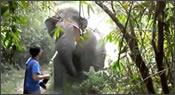 elefante embistiendo