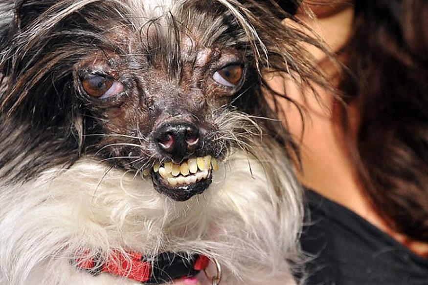 new-ugliest-dog-2