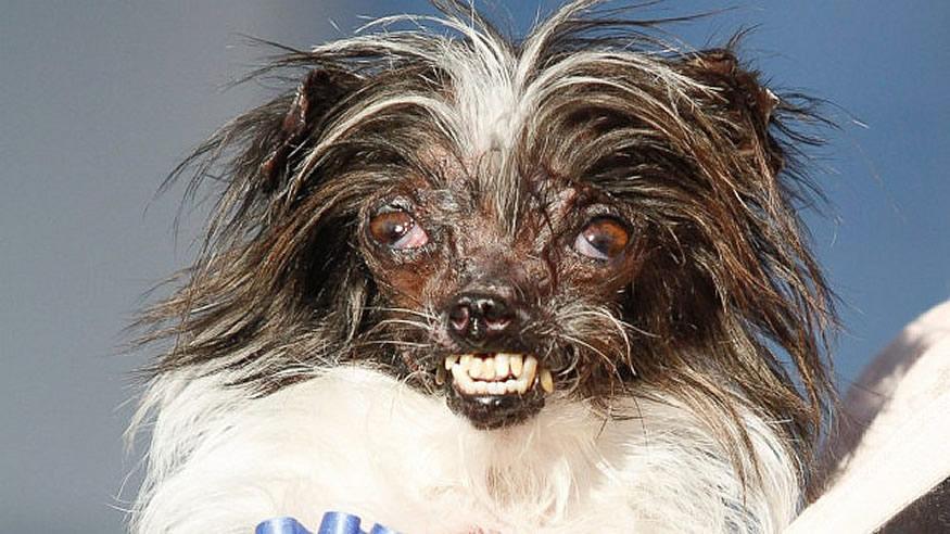 new-ugliest-dog-3