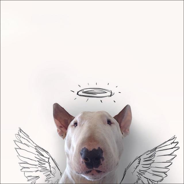 perro-angel