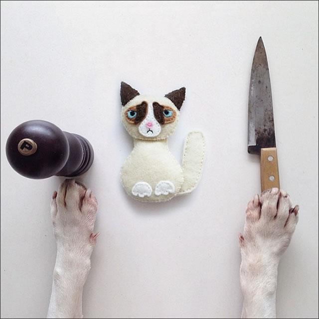 perro-cat