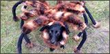 perro araña mutante