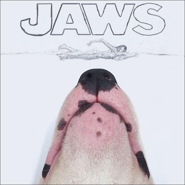perro-tiburon