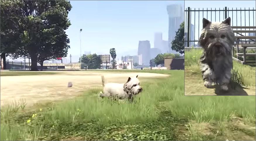 peyote-perro2