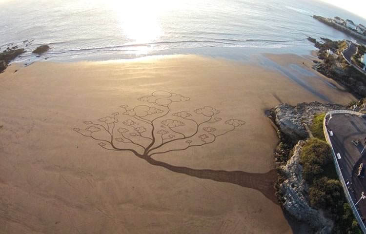 arbol-playa