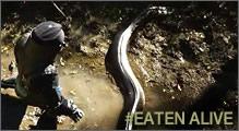 comido por una anaconda