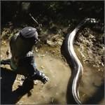 serpiente-fail-comida