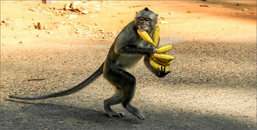 rodeado de monos