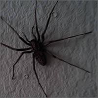 Arañas en mi casa