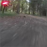 Carrera de drones en el bosque