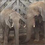 Una mañana disturbing en el zoo