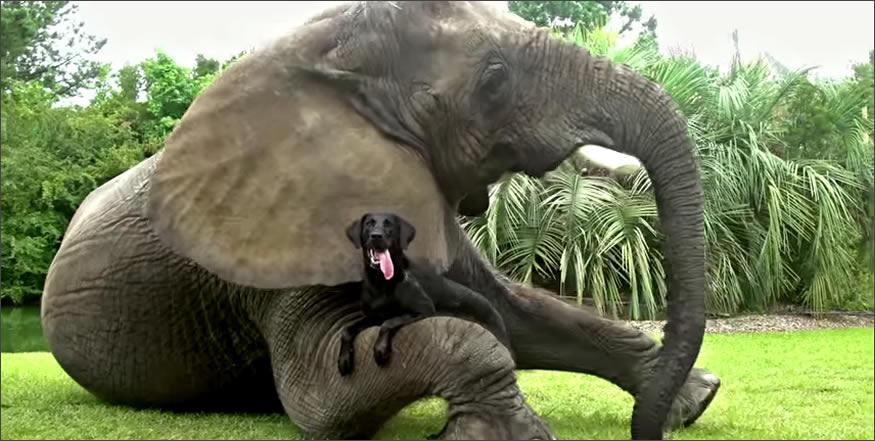perrete-elefante