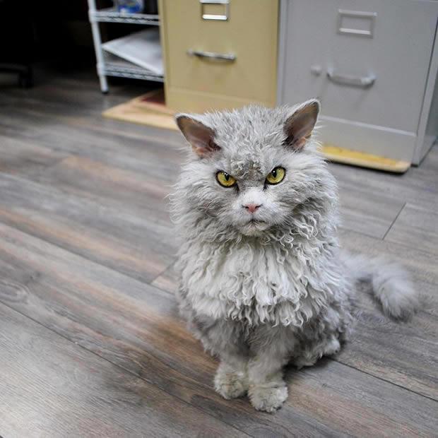 gato-albert