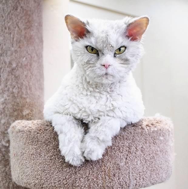 gato-asomado