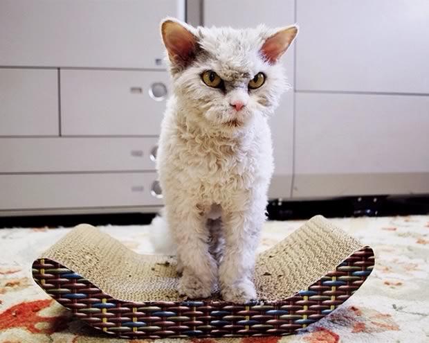 gato-enfadado-mucho