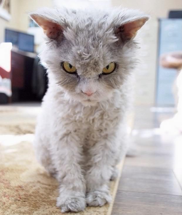 gato-mirada