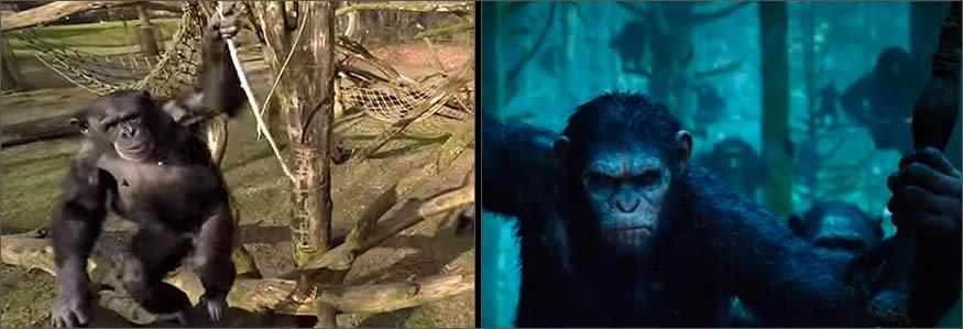 recinto de los chimpancés