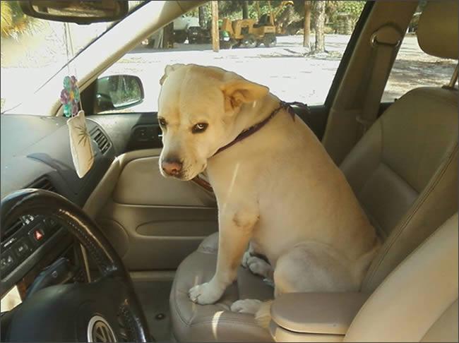 Tu perro cuando se da cuenta que vais al veterinario
