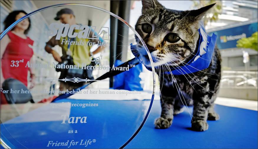 gato-heroe