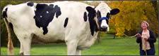 mega-vaca