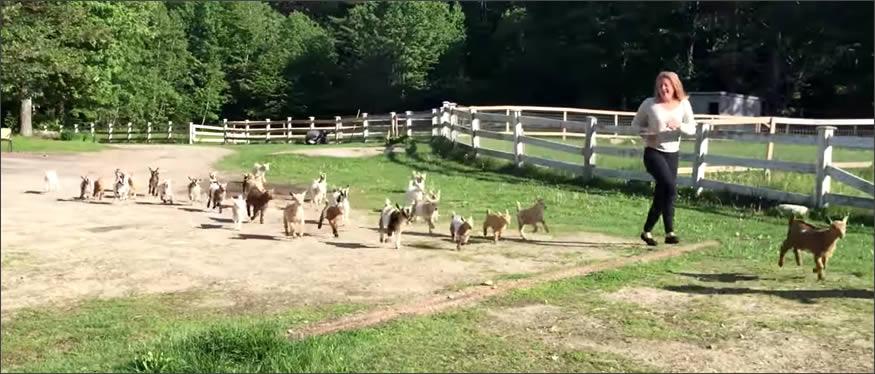 Running con cabritas