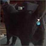 Diamantes para ojetes de gato