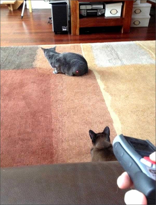 convivir con gatos
