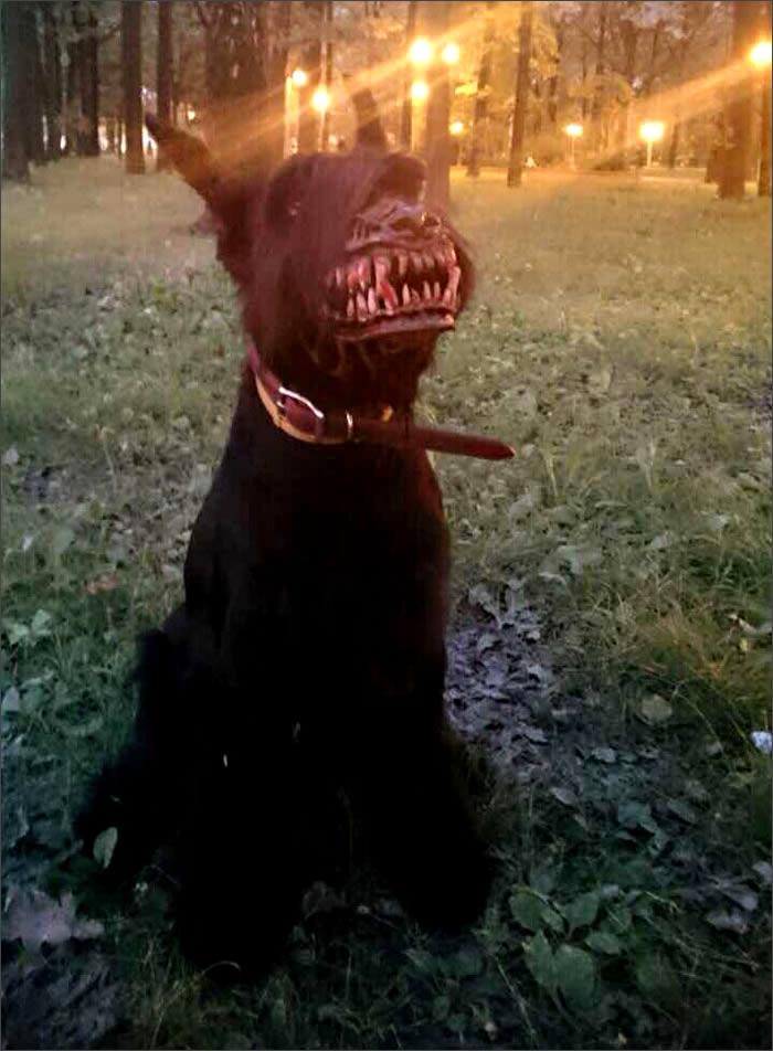 dientes-perrunos