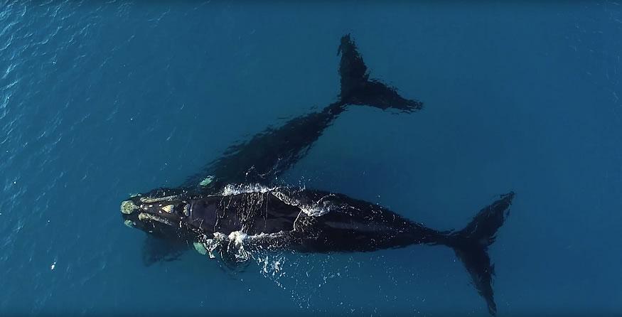 paddle-surf-ballenas-1