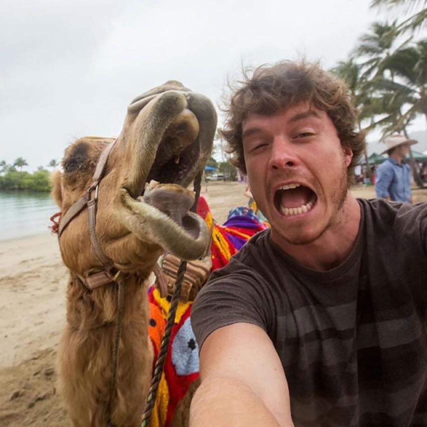 selfie-cammello