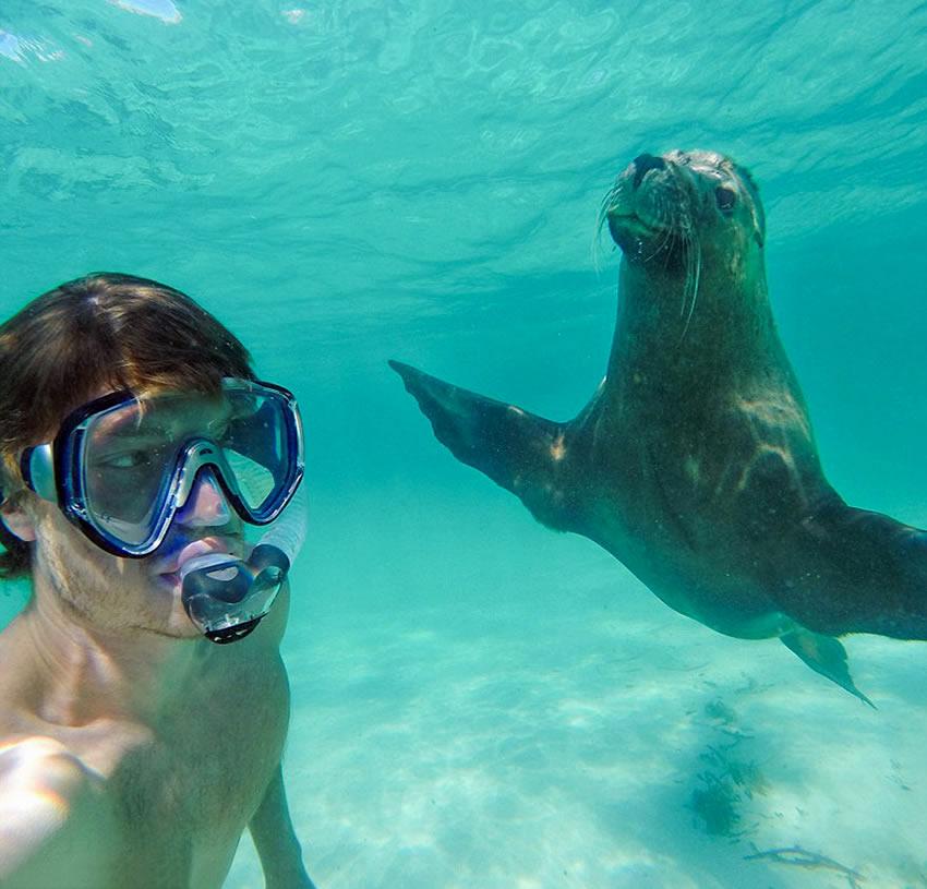 selfie-foca