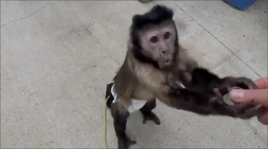 Mono nervioso