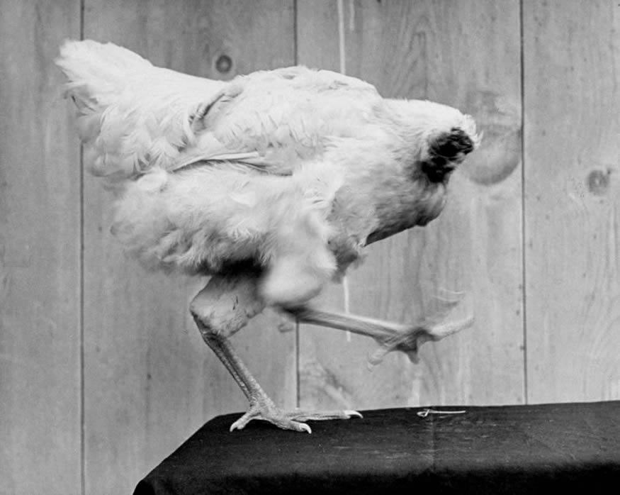 mike-pollo1